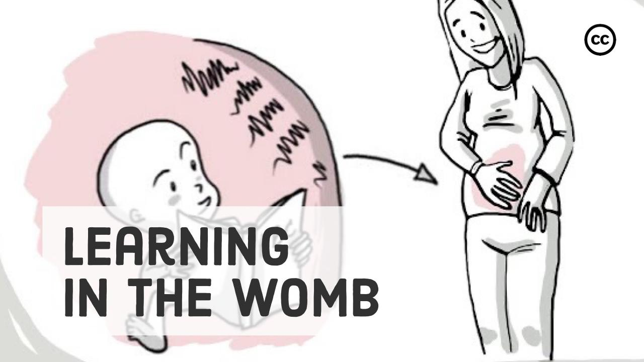 Learning in the Womb